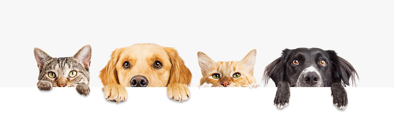 TBox Pet - Vain parasta lemmikillesi